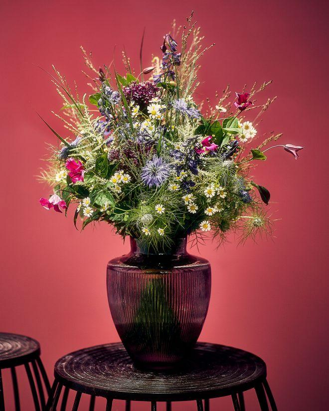 Scilla Witte Floristik